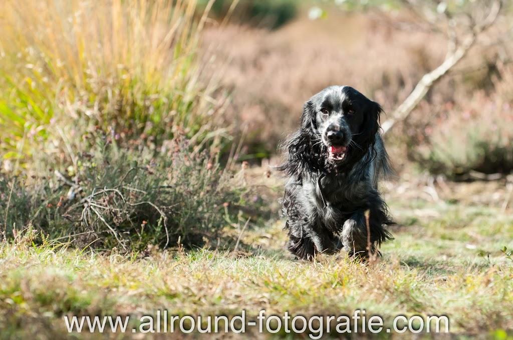 Huisdierfotografie - Huisdierreportage Hond (30 september 2012) - 2