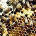 Homem morre após sofrer parada cardíaca em Samambaia; causa pode ter sido picadas de abelhas