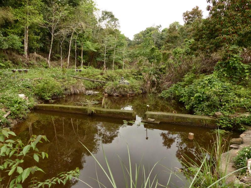 Puli, Nantou county, cueillette de thé - P1050632.JPG