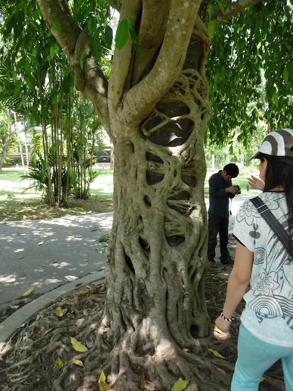 Chine .Yunnan . Lac au sud de Kunming ,Jinghong xishangbanna,+ grand jardin botanique, de Chine +j - Picture1%2B575.jpg