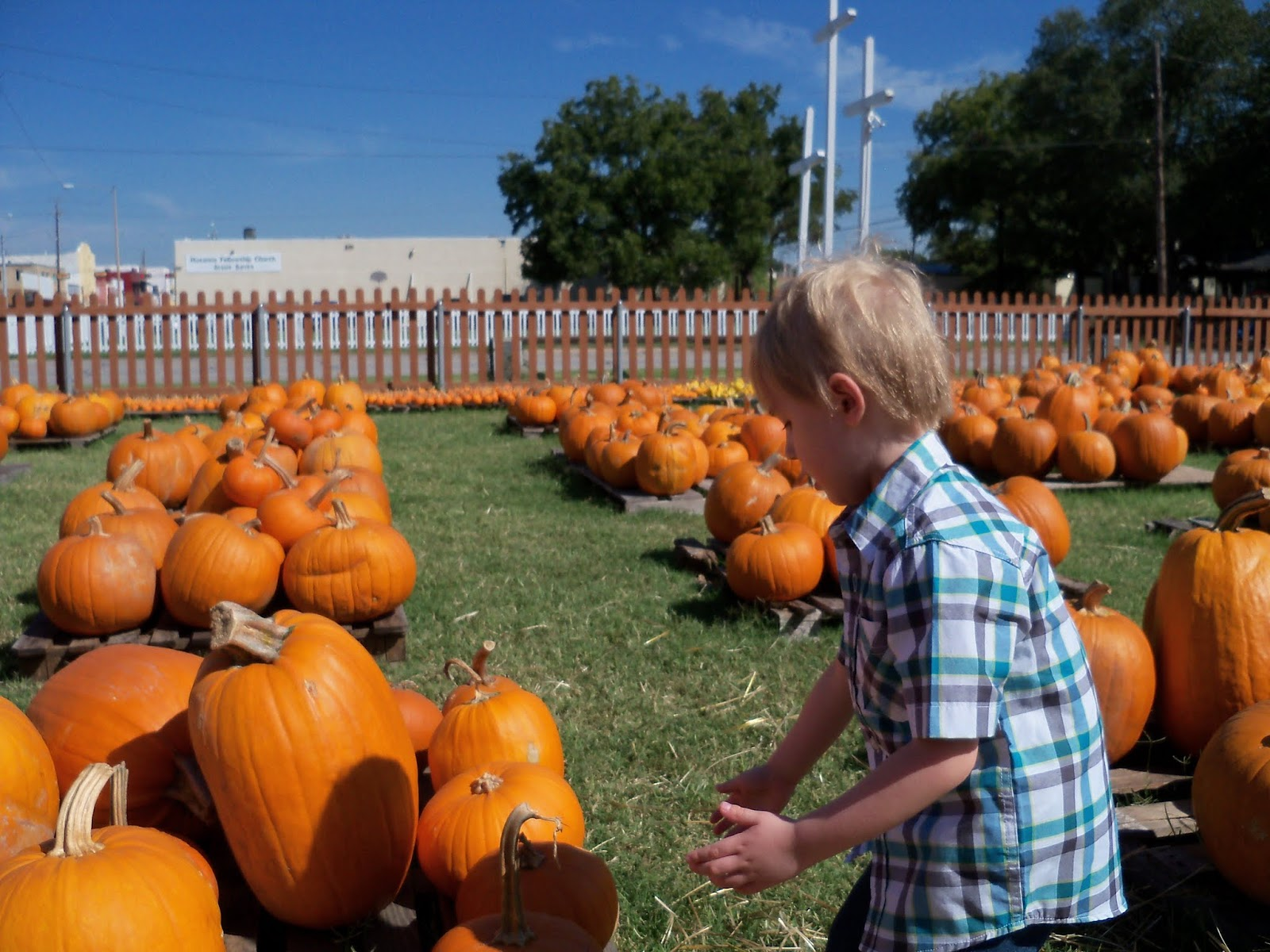 Pumpkin Patch 2015 - 100_0398.JPG