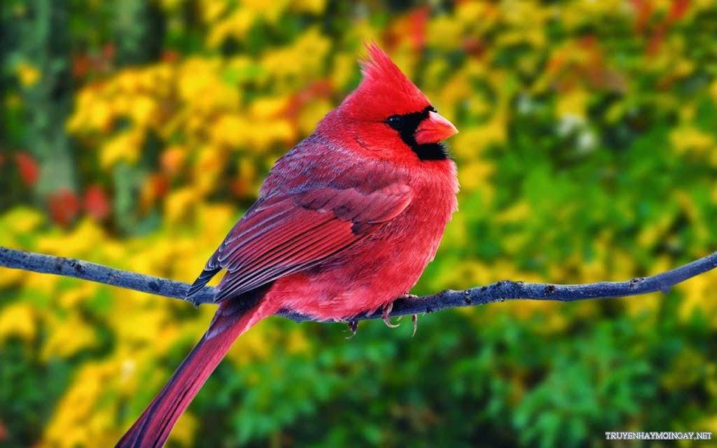 Hình Ảnh Những Chú Chim Đáng Yêu Đủ Màu Sắc