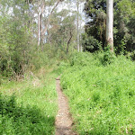 Bush track surrounded by weeds (78028)