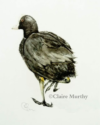 British Bird Watercolour Painting. Coot illustration. Pond life.