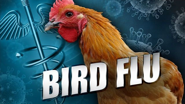 Russia: First case of H5N8 bird flu in humans has been reported