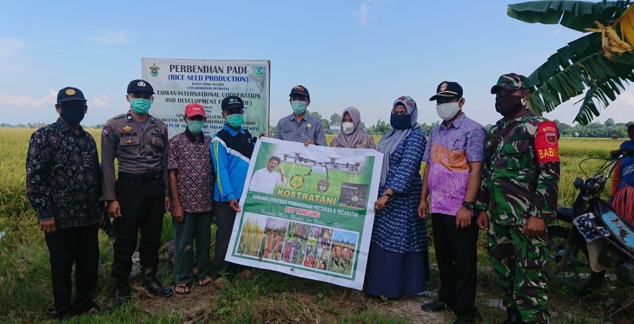 Ditengah Pandemi Covid 19, Penyuluh Kab.Wajo Aktif Dampingi Petani Penangkar Benih Kerjasama Taiwan dan Unhas