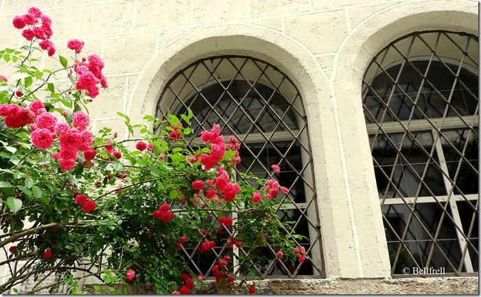 Rosenfenster 2
