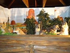2015.12.07-011 loups
