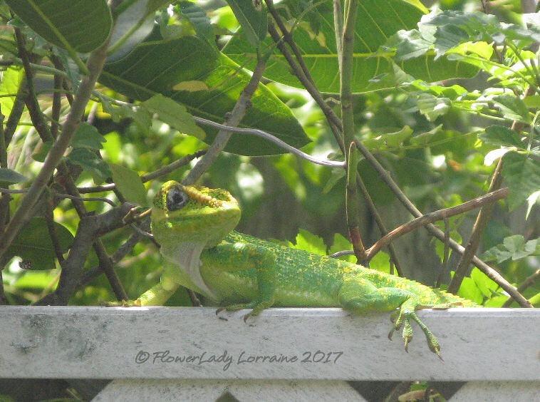 [04-21-green-lizard%5B4%5D]