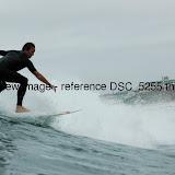 DSC_5255.thumb.jpg