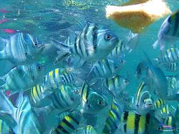 pulau harapan, 5-6 september 2015 skc 041