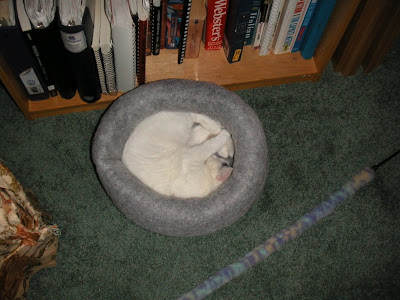 Little ball of cat in a bed