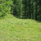Pré fleuri. Fex Crasta, 2000 m (Engadine, Grisons, CH), 14 juillet 2013. Photo : J.-M. Gayman