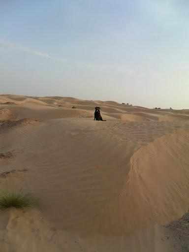duny nie sú veľké