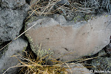An interesting petroglyph resembling a modern day Easter egg.