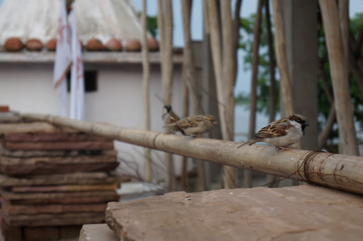 Omkareshwar and Hanmuntiya water resort - DSC06969.JPG