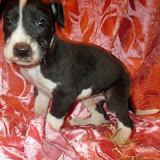 Violet @ 5 weeks