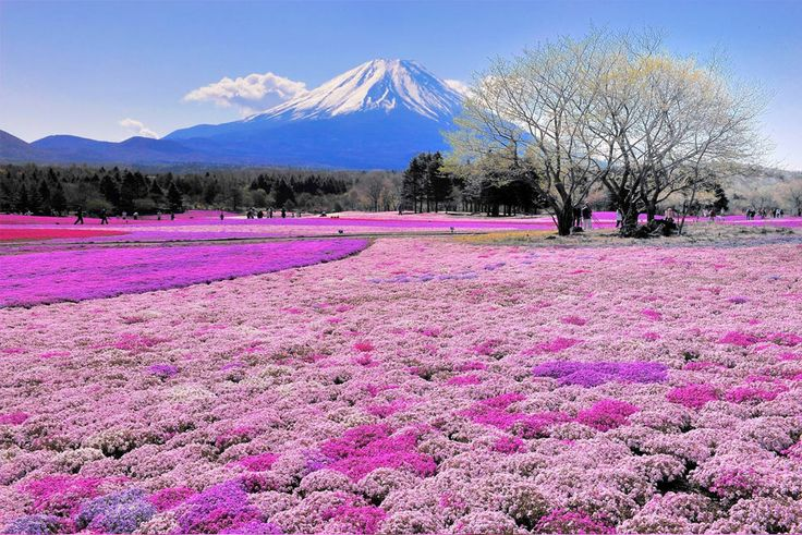Lugar deslumbrante região de Fuji no Japão