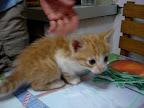 Kitty at Gringlish House (Trujillo, Peru)
