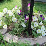 Gardening 2012 - 115_1693.JPG