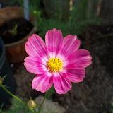 Gardening 2010, Part Two - 101_1881.JPG