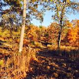 Anderson Creek Hunting Habitat - DeerHabitat008.JPG