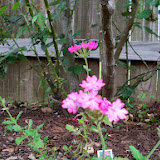 Gardening 2014 - 116_1273.JPG