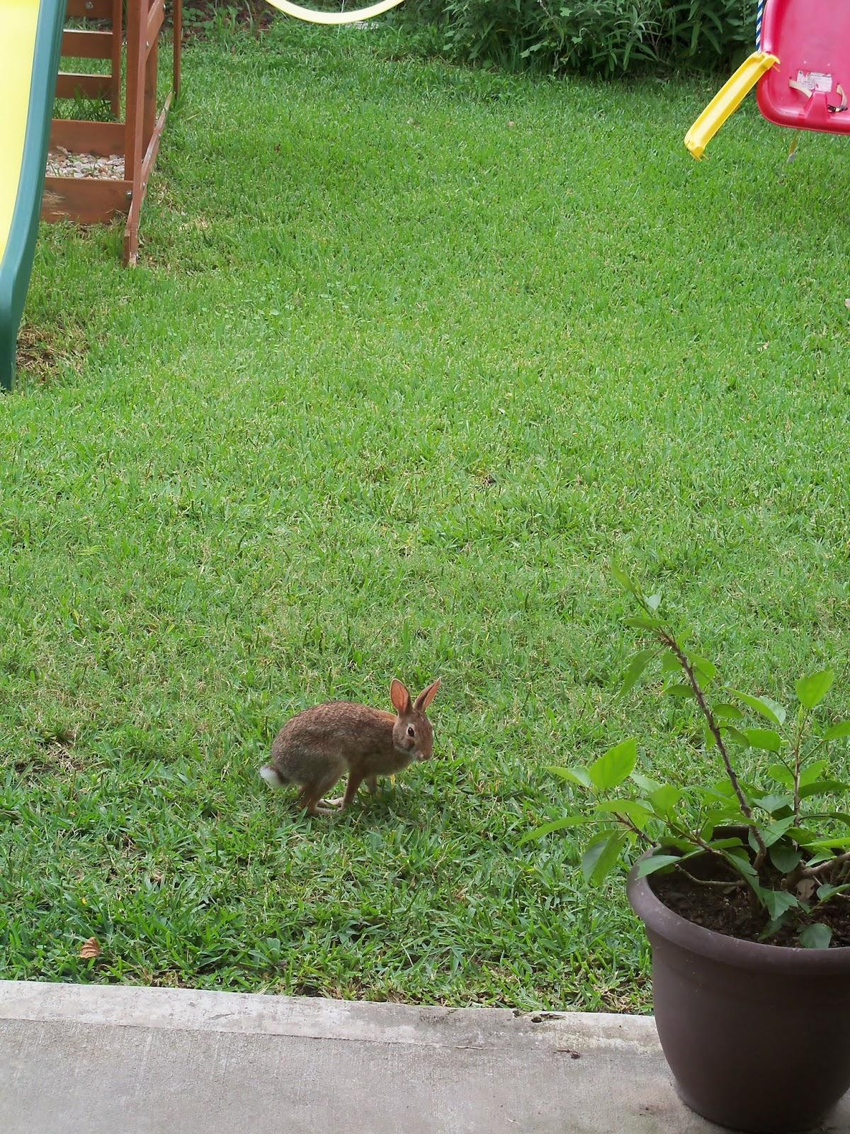 Gardening 2015 - 116_9260.JPG