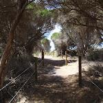 Fenced track along dunes (106567)