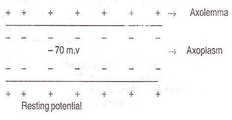 membrane-potential