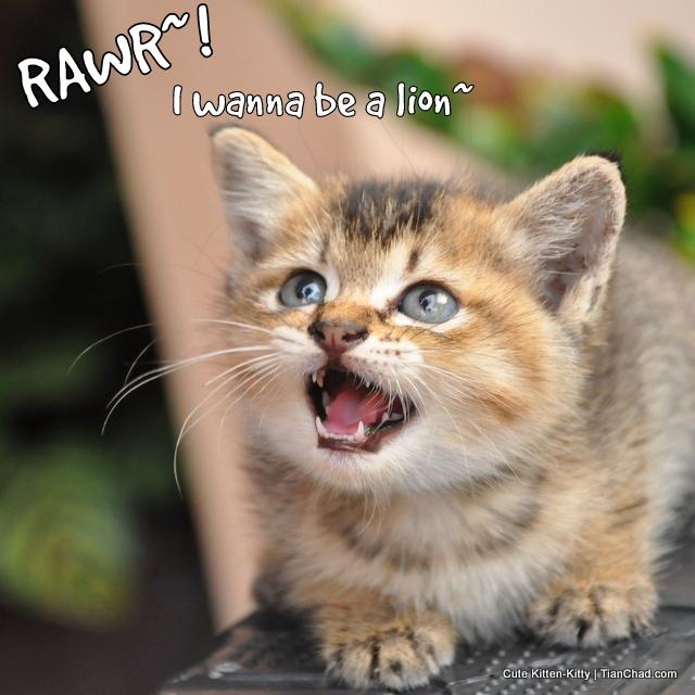 kitten eye issues