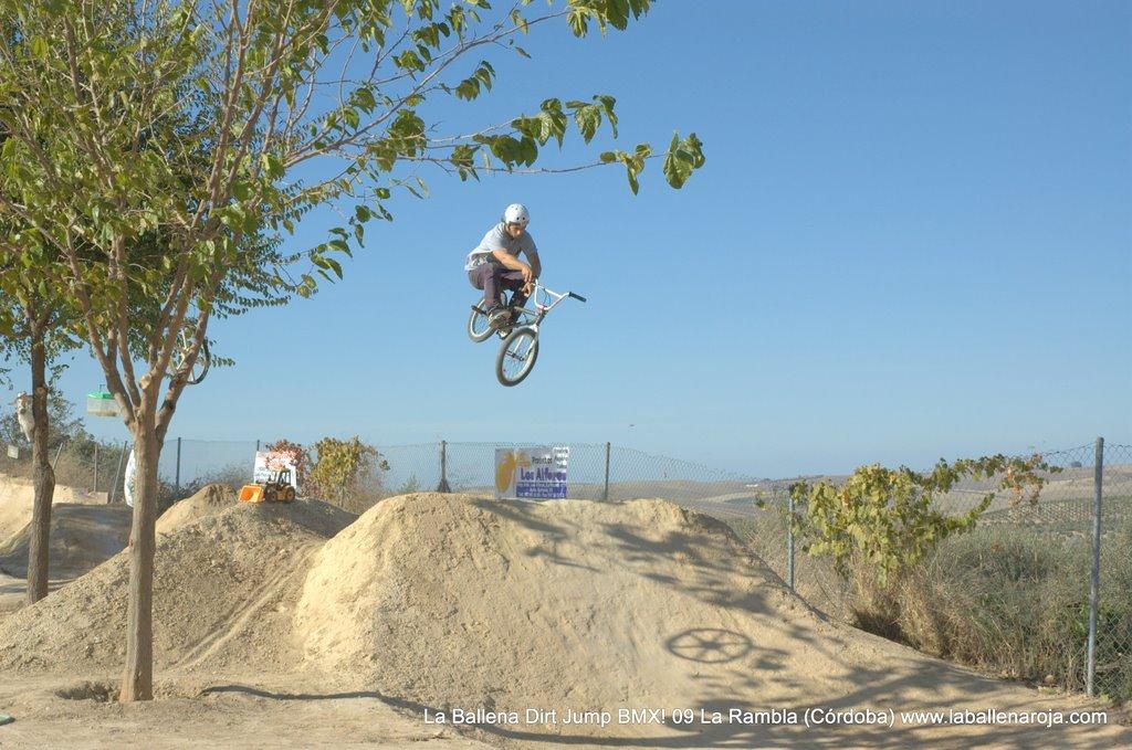 Ballena Dirt Jump BMX 2009 - BMX_09_0059.jpg