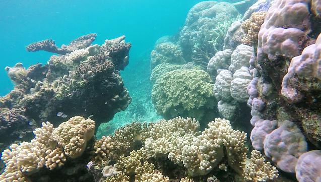Great Barrier Reef, Dead