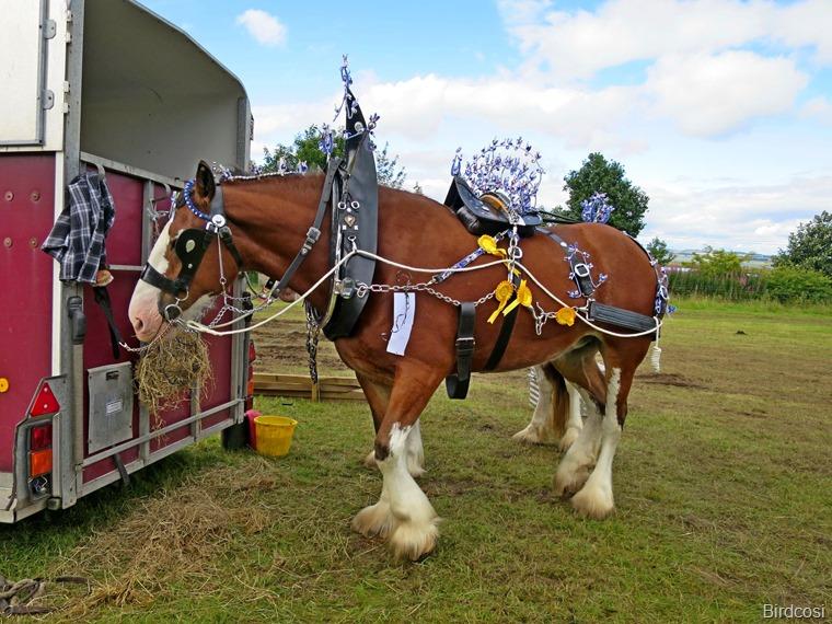 2016-08-13 Kinross Fair  0372
