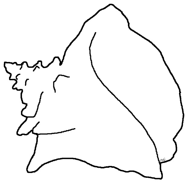 How To Draw Conch Shell  Queen Or Pink Conch Coloring Page  Seashells