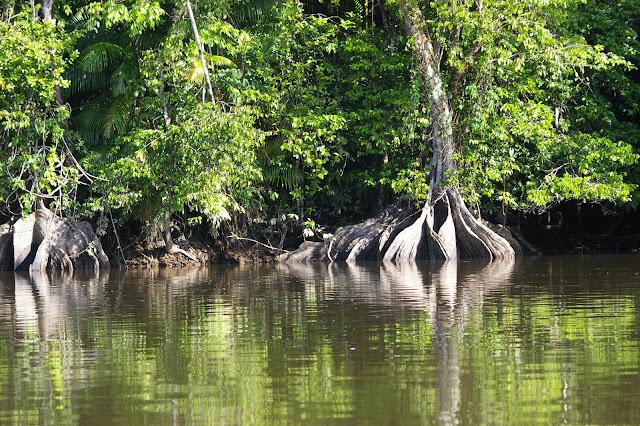 Bord de l'Approuague en aval de Saut Athanase (Guyane). 23 novembre 2011. Photo : J.-M. Gayman