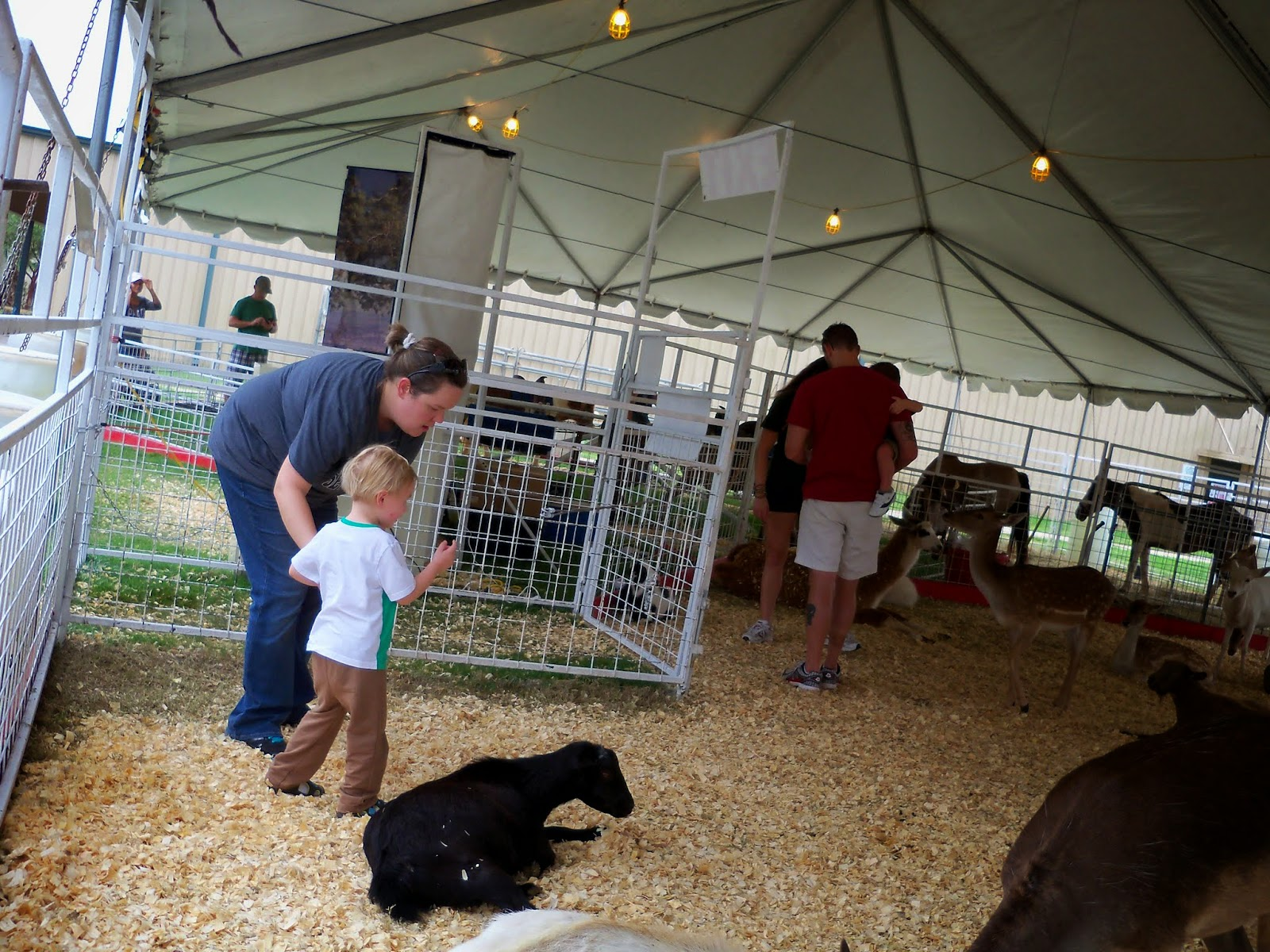 Fort Bend County Fair 2014 - 116_4267.JPG