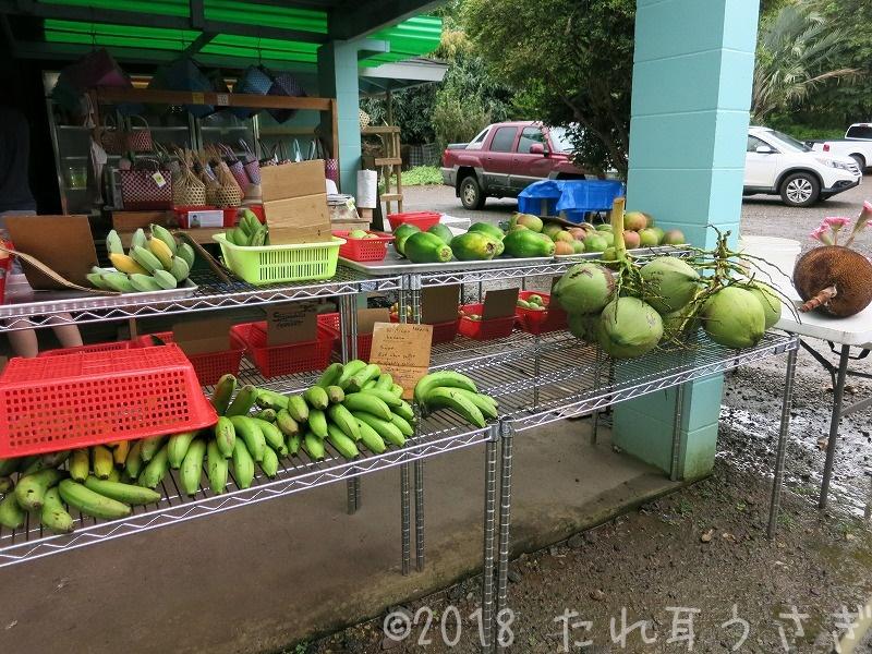 ハワイ旅行⑮ ハニークリームパイナップルが絶品!フランキーズ・ナーサリー(果樹園)でフルーツ食べ放題!マカプウ岬半日ツアーに行ってきたのでレビュー・口コミ