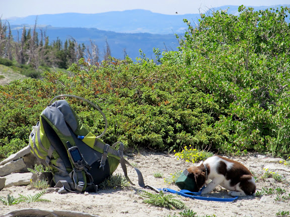 Boulder having a snack at the summit