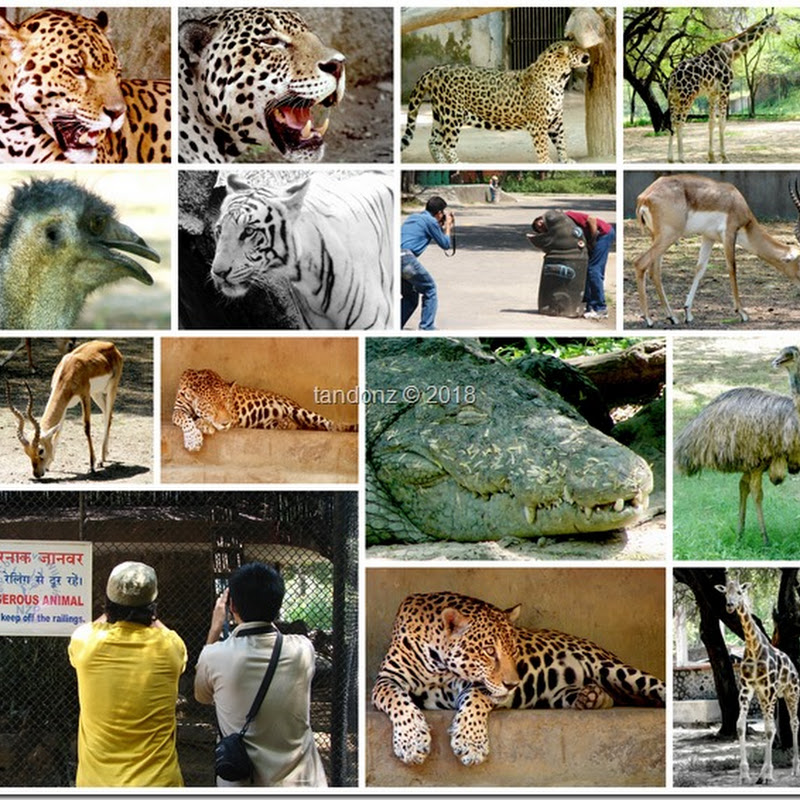 Photowalk–National Zoological Park, Delhi (2008)