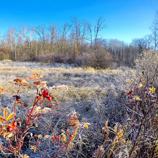 Frosted scene near Twin Lakes crossing, October 24th, 2016.