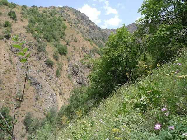 Biotope de Phoenicurusia margelanica STAUDINGER, 1881, et Polyommatus magnifica GRUM-GHRISMAÏLO, 1885, Varzob (35 km nord de Dushanbe), 1505 m, 7.VII.2009, Tadjikistan. Photo : J.-F. Charmeux