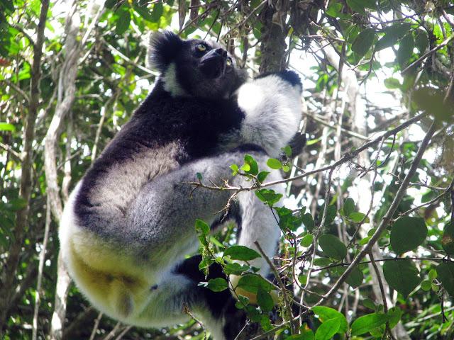 صور من مدغشقر Madagascar 14686516871