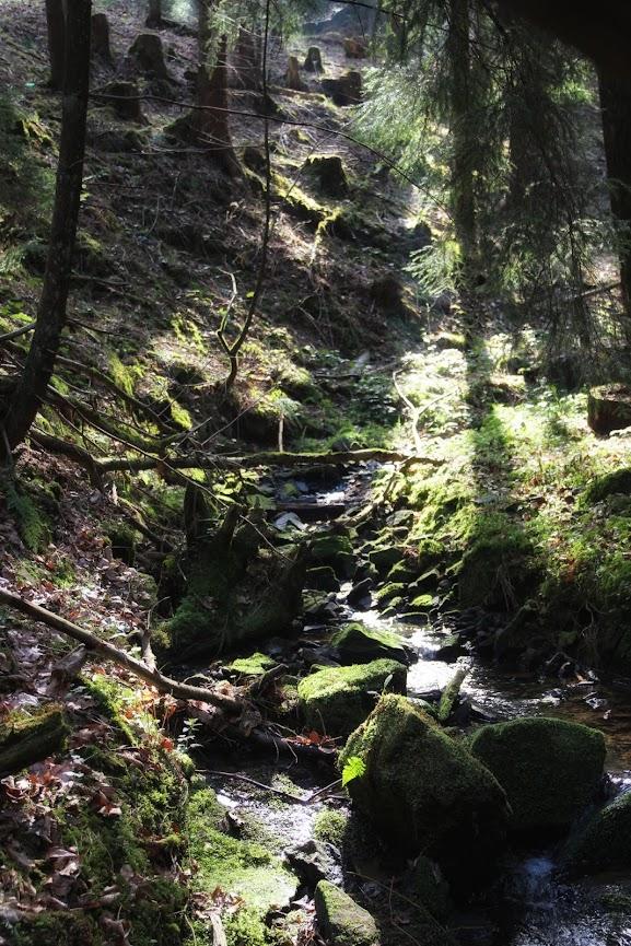 Lochbachklamm im Knüll
