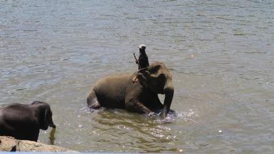 Elephant Bath 0