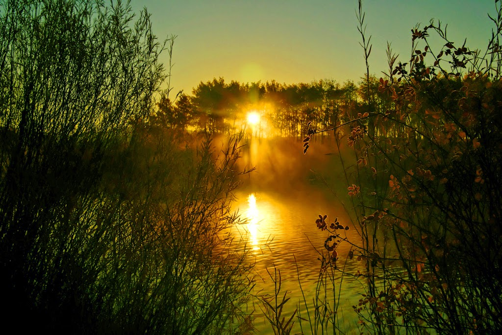 """""""Sunrise Through the Trees and Fog"""" by Robert Dunbar -- 2nd place Print"""