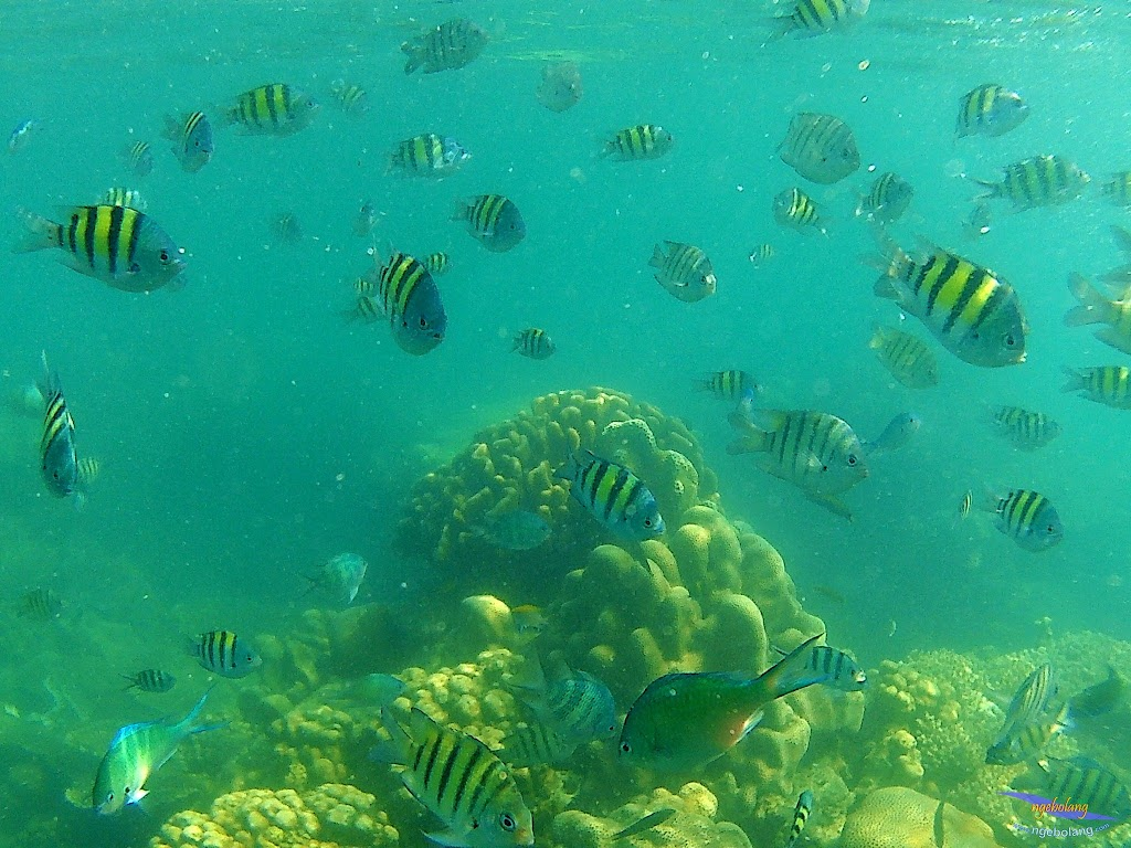 family trip pulau harapan, 1-2 agustus 2015 gopro 16