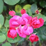 Gardening 2012 - IMG_2909.JPG