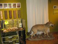 Részletek az Erdőjárók kalauza-Zemplén természeti értékeit bemutató kiállításból10.jpg