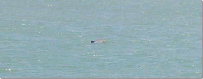 golfinho-na-baia-dos-golfinhos